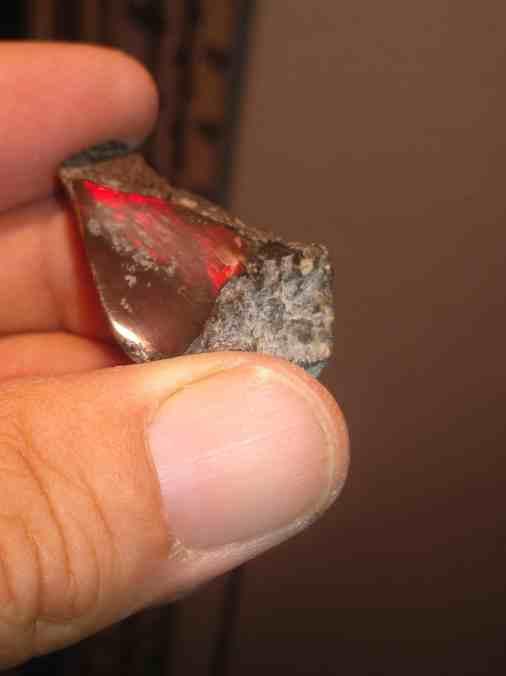 Red Ammolite