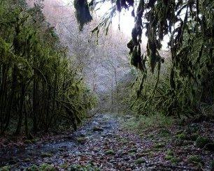 прогулка по самшитовому лесу в Абхазии
