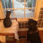 Parker and Mille cat looking out the window