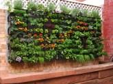 Wall of herbs
