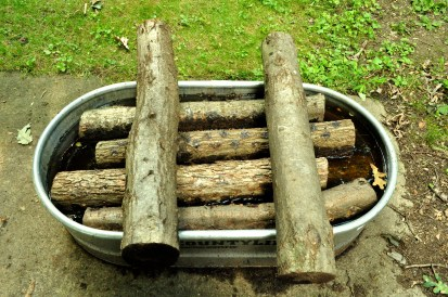 Soaking logs for shiitake expermentation