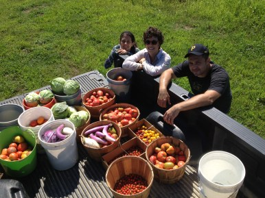 Fresh from the field! Tomatoes, peppers, and cabbages, all bound for Anderson Dining Hall!