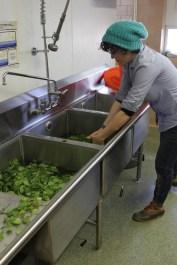 Katie washing greens.