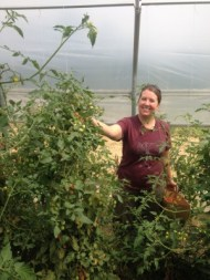 Amber harvesting cherry tomatoes in the solar high tunnel