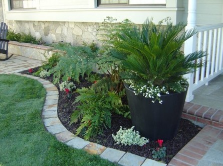 Sago Palm in Container