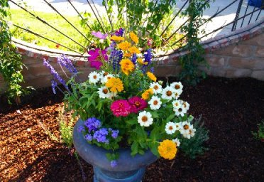 Container garden with mixed perennials and annuals