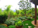 Garden-Design-with-view-los-angeles-palm-trees-Shirley-Bovshow-EdenMakers