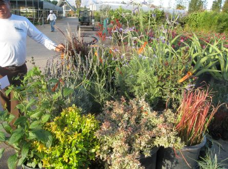 Plants for the landscape