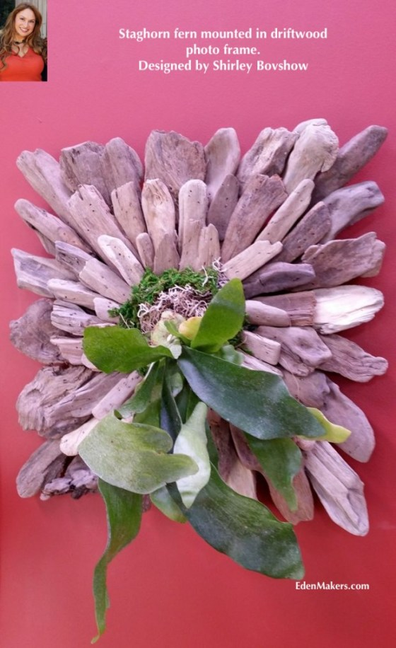 DRIFTWOOD-PHOTO-FRAME-AS-STAGHORN-MOUNT