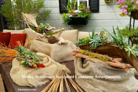 shirley-bovshows-palm-frond-succulent-container-arrangment-vignette-home-and-family-show-hallmark-designer-edenmakers-blog