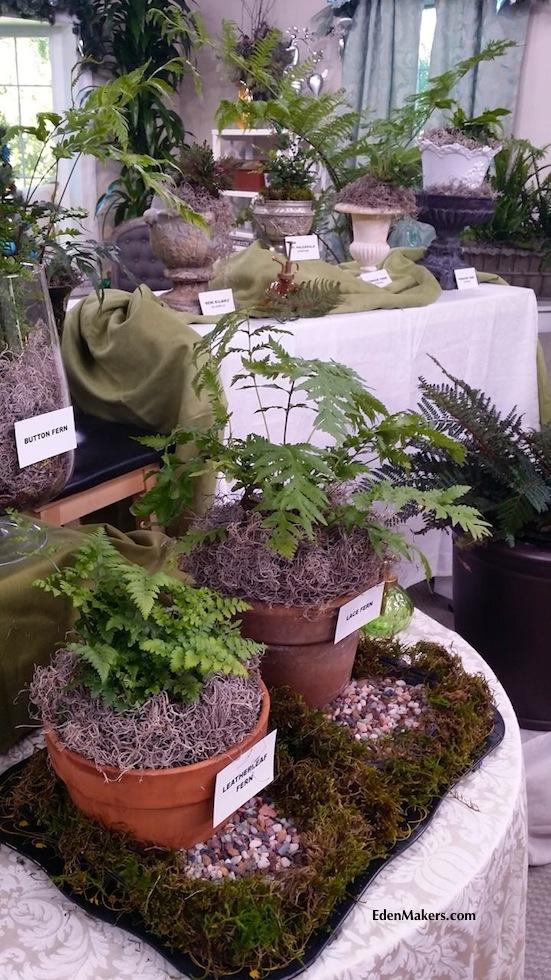 fern-plant-display-shirley-bovshow-home-and-family-show-hallmark-edenmakersblog