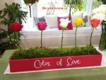 the-meaning-of-rose-colors-in-love-and-relationships-valentines-shirley-bovshow-edenmakers-blog