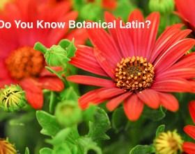 Do you know botanical latin