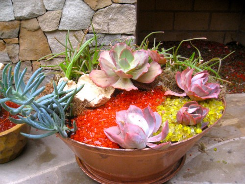 Succulent container garden from cuttings and recycled materials.