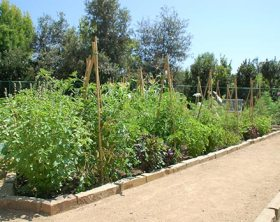 Edible Garden by John Lyons in Los Angeles