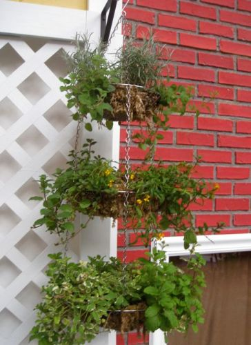 Hanging onion basket repurposed as edible garden container!