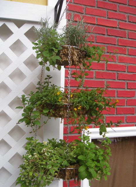 onion rack planter from Dollar Tree store
