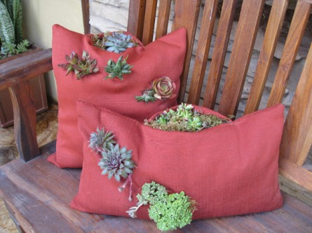 succulent planted in a pillow planter, exterior pillow
