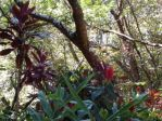 Wild Tropical Plants