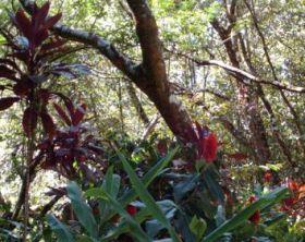 Wild Tropical Plants