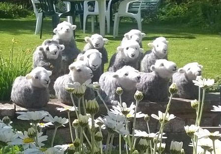 Annis flock May 16