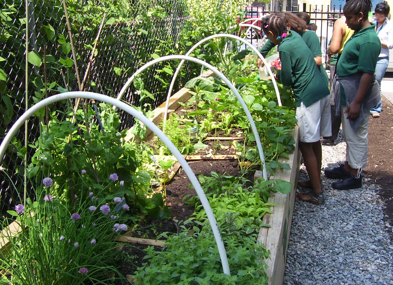 NEWARK LID COMMUNITY GARDEN