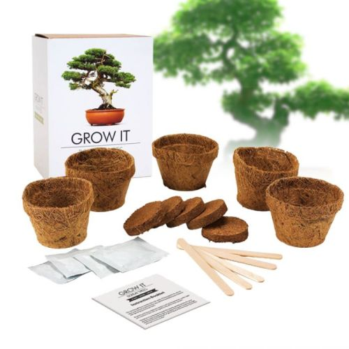 kit bonsai wishlist fete des meres