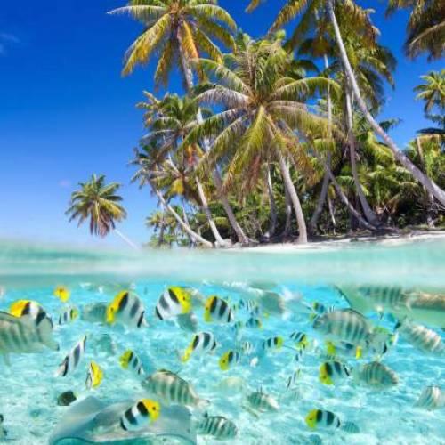 Poissons multicolores aux Maldives