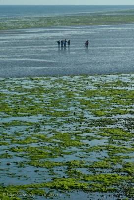 Apenas se retira el mar, las gente viene a dar un paseo sobre la arena y las rocas descubiertas.