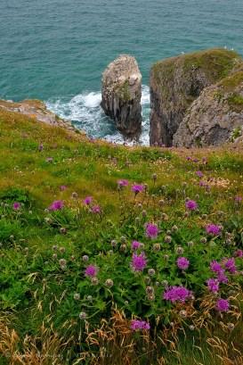 Estas flores silvestres sirven de primer plano para fotografiar la columna de roca en el mar.