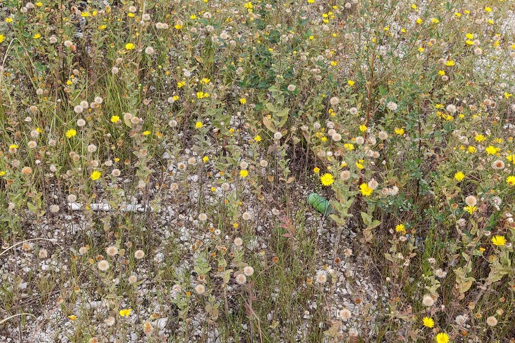 Jennifer Colten, Wasteland Ecology 8942. Click to enlarge.