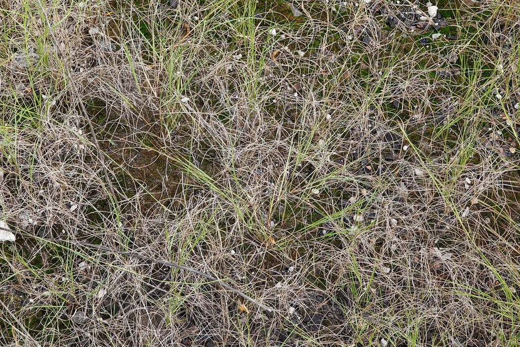 Jennifer Colten, Wasteland Ecology 8969. Click to enlarge.