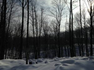 Snow-covered woods in northern Wisconsin