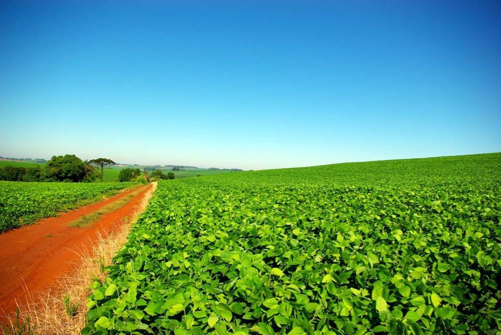 Soybean plantation in Brazil. Photo by Tiago Fioreze, CC BY-SA 3.0.