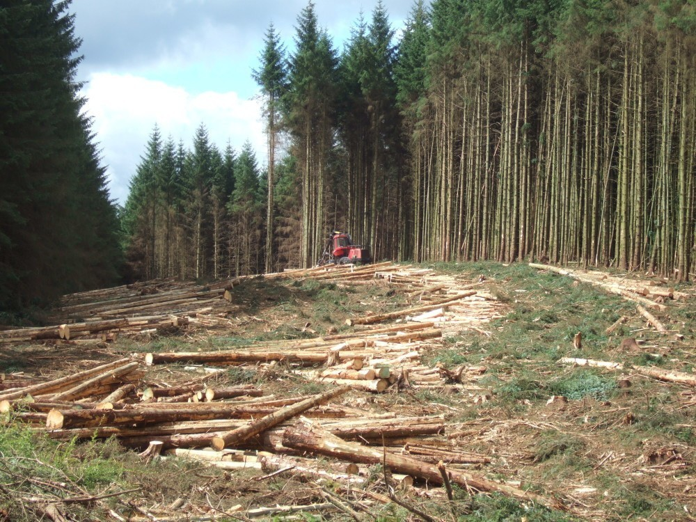 """""""Timber Harvesting in Kielder,"""" by The Boy that time forgot, Wikipedia, CC BY-SA 3.0."""