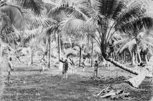 Workers on a coconut plantation. Image courtesy of Wellcome Library, London. CC BY 4.0.