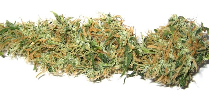 A dried bud of cannabis. Image from Creative Commons.