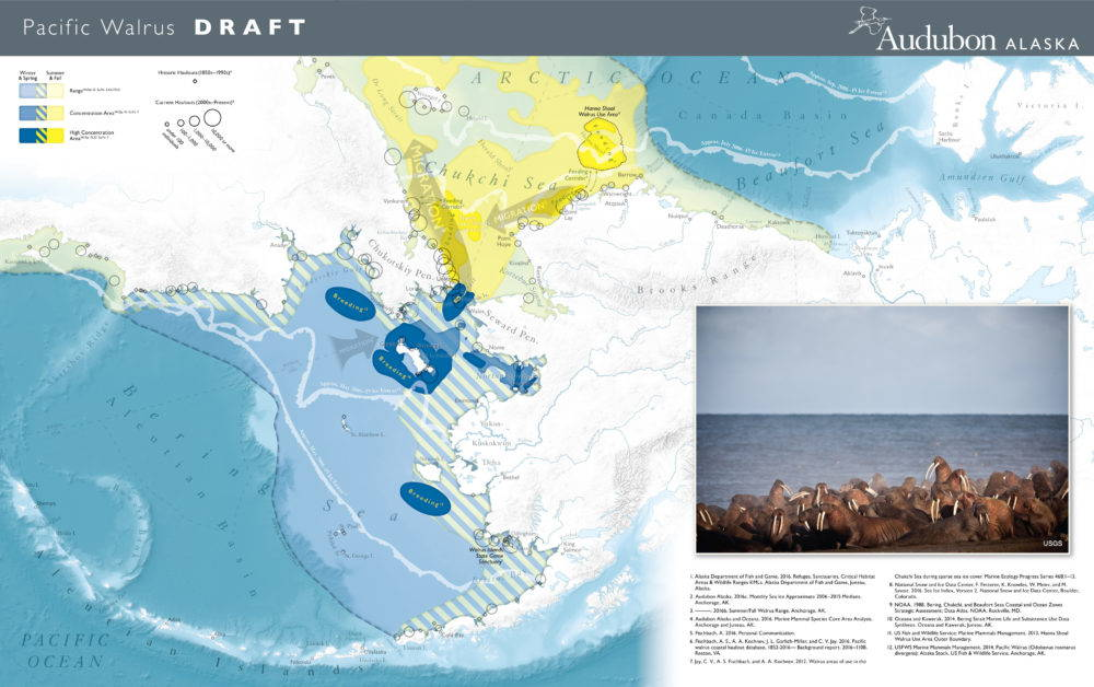 Here, a wide expanse of the best available walrus data, ranging from points to polygons to lines, is crafted into a much more accessible representation of the key features of walrus biology.