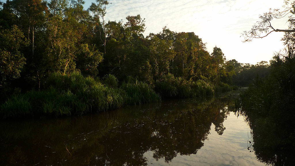 """Sekonyer River in Tanjung Puting National Park, Central Kalimantan, Borneo, June 2015. Image from <a href=""""https://commons.wikimedia.org/wiki/File:Tanjung_puting90075.jpg#"""" target=""""_blank"""">Wikimedia Commons</a>."""