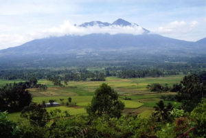 """A view of Sumatra's rice fields at the foot of Mt. Singgalang, 1989-1990. Photo by <a href=""""http://web.ics.purdue.edu/~blackwoo/photos.htm#"""" target=""""_blank"""">Evelyn Blackwood</a>."""