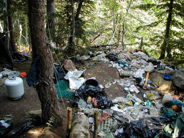 A propane tank, cookware, and lots of bags and bottles litter a small clearing in a pine grove.