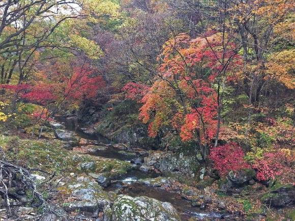 Image showing fall foliage over a creek at Chiaksan National Park in Kangwan Province, South Korea.