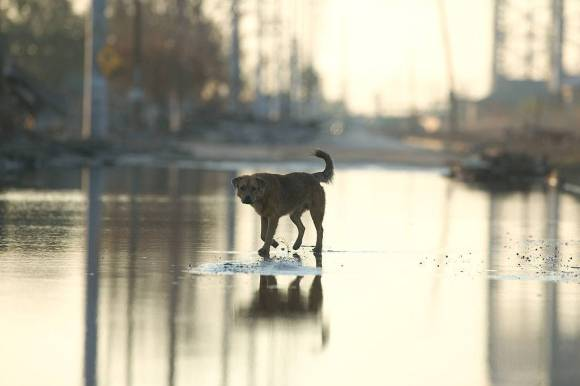 A medium-sized brown dog trots through some shallow water in an urban landscape.