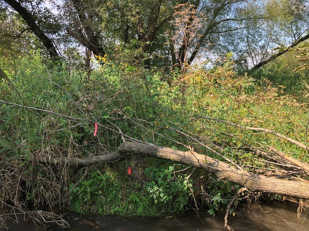 A fallen tree lying over plants growing on a river bank.