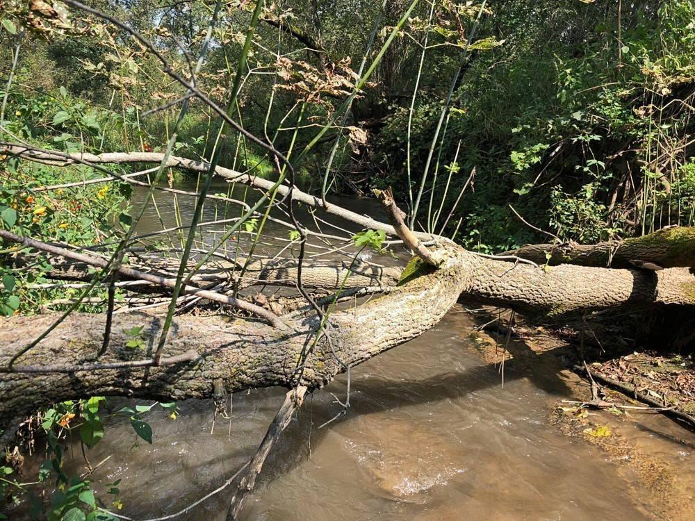 A fallen tree lying across a small creek.