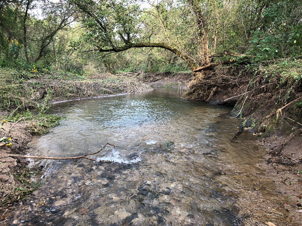 Clear running water over river stones beneath many trees.