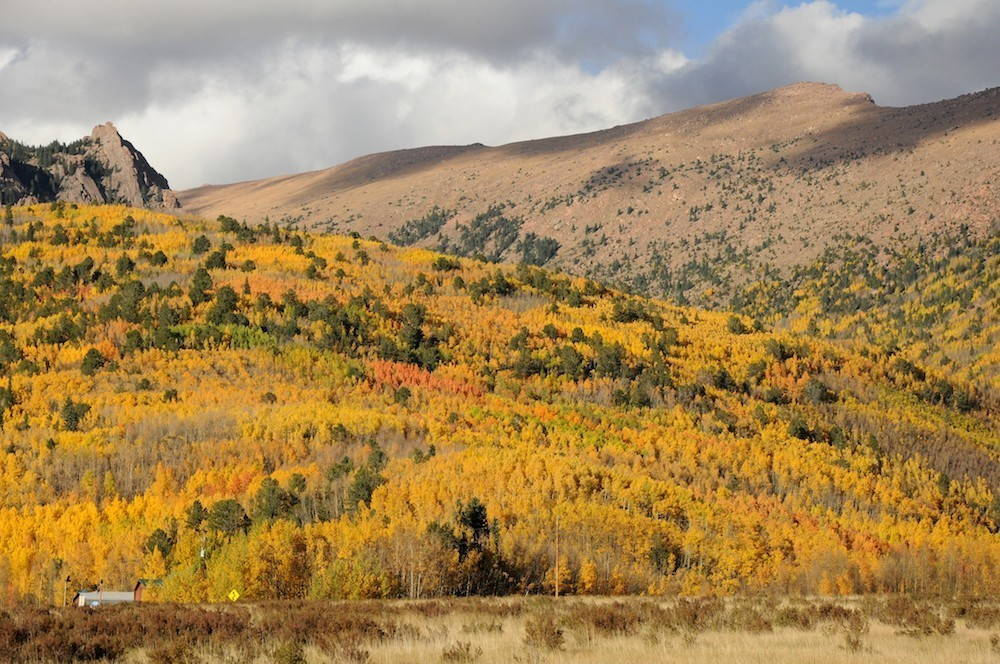 Golden aspen trees cover the north flank of Pikes Peak in autumn.