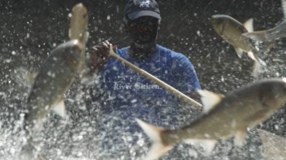 Several medium-sized light-colored fish and droplets of water fill the foreground while a man in a black baseball cap and a blue t-shirt paddles a canoe in the background.