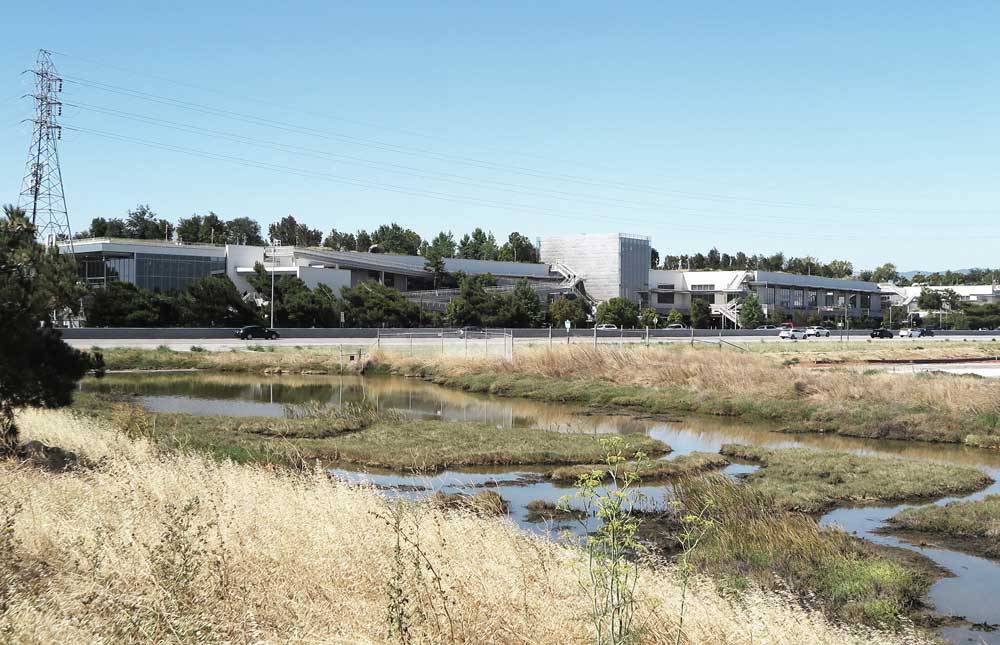Brown and green wetlands and a large gray building