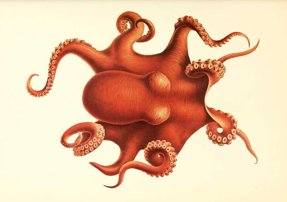 An illustration of an octopus